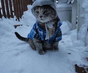 cat, cold, and winter image