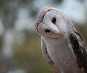bird, owl, and cute image