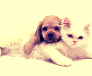 cat, cute, and adorable image