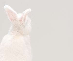 rabbit, animal, and white image