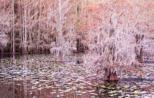 pastel, caddo lake, and kathy van torne image
