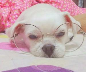 dog, doggy, and glasses image