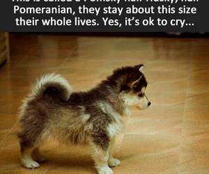 cry, puppy, and dog image