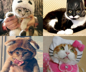 adorable, cats, and fashion image