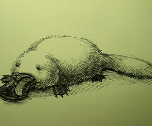 animal, drawing, and sketch image