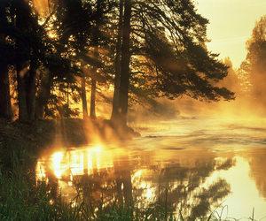 tree, lake, and nature image