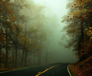 autumn, mist, and road image