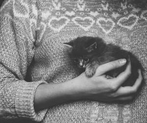 animals, happy, and love image