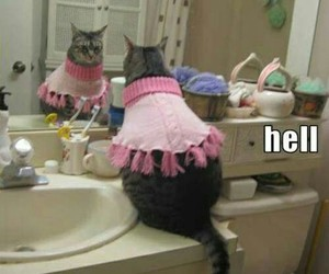 funny, lol, and cat image