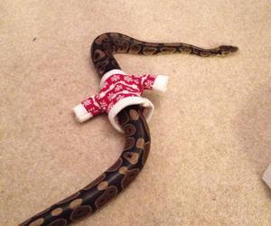 animal, christmas, and funny image