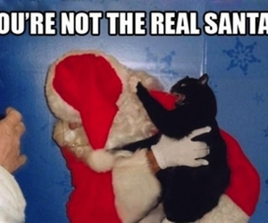 cat, funny, and santa image