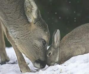 deer, animal, and rabbit image