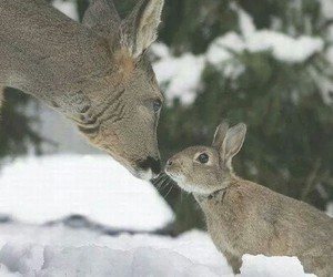 deer, rabbit, and bunny image
