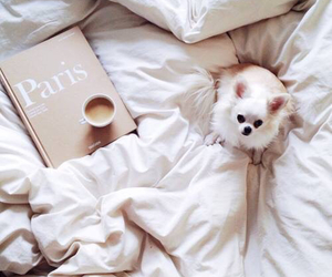 dog, bed, and coffee image