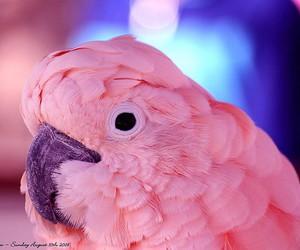 pink, bird, and animal image