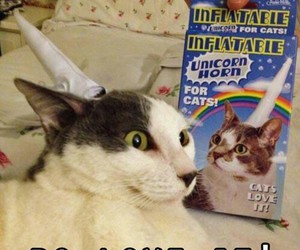 cat, fake, and funny image