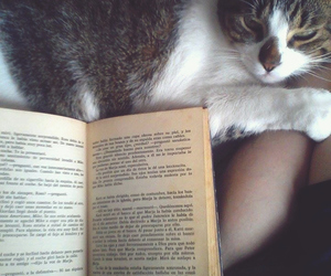books, cat, and indie image