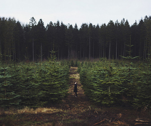indie, grunge, and nature image