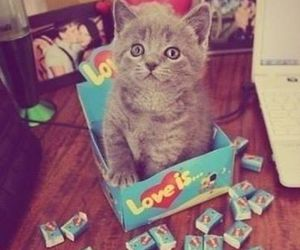 cat, kitten, and love is image