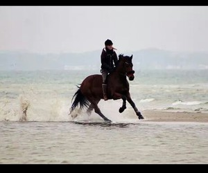 equestrian, horse, and see image