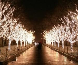beautiful, lights, and season image
