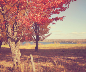 trees, autumn, and leaves image