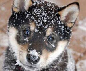 black, brown, and dog image