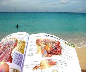 medicine, anatomy, and study image