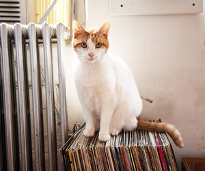 albums, cat, and furry image