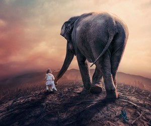 elephant, cute, and friends image