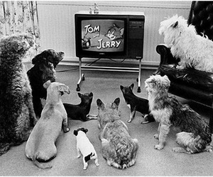 dog, tom and jerry, and tv image