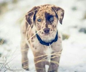 christmas, puppy, and beautiful image