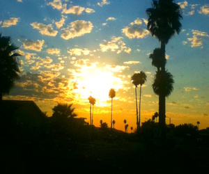 cali, pretty, and palm trees image