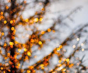 lights, beautiful, and tree image