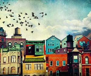 bird, colour, and home image