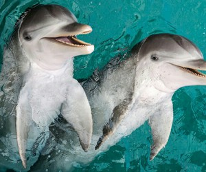 animals, dolphins, and pretty image