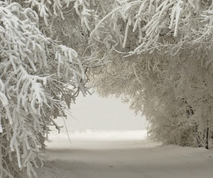 forest, white, and snow image