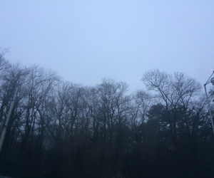 dark, Darkness, and forest image