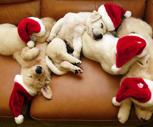 animals, christmas, and dogs image