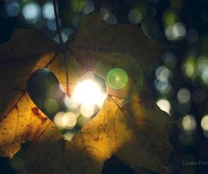 autumn, leaf, and love image