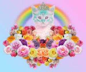 cat, flowers, and rainbow image