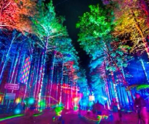 edm, electric, and forest image