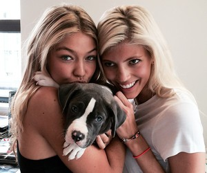 gigi hadid, dog, and model image
