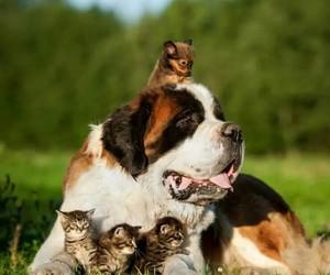 animals, naturaleza, and cute image