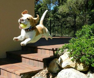 doggy, play, and fly image