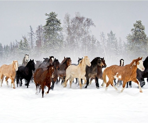 christmas, horses, and running image