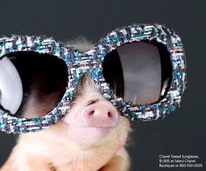pig, piggy, and sunglasses image