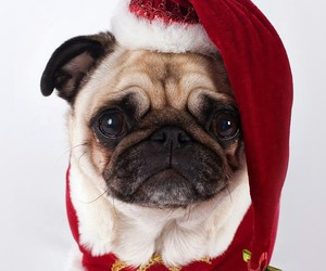 dog, red, and santa image