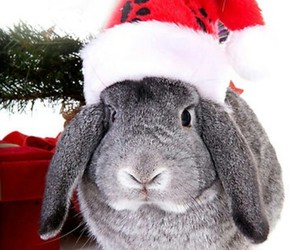 bunny, red, and santa image