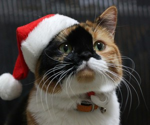 cat, santa, and xmas image